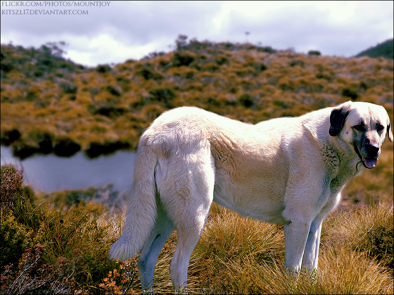 Shepherd By Lake by xxtgxxstock