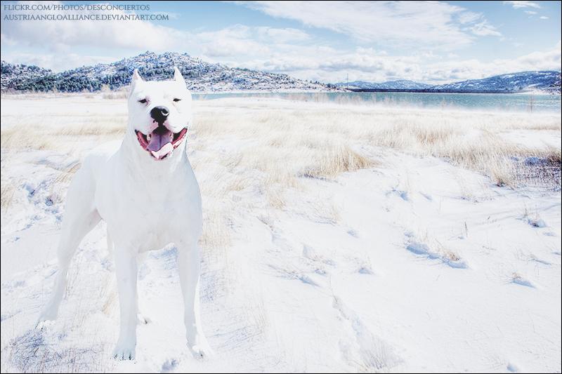 Winter Dogo by xxtgxxstock
