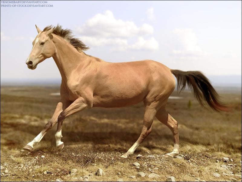 Desert Runner by xxtgxxstock