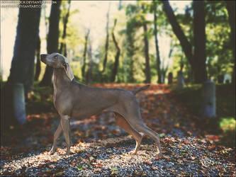 Wondering In The Park by xxtgxxstock