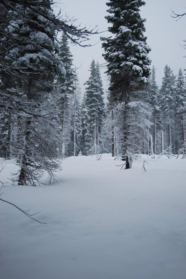 Snowy Background 4 by xxtgxxstock