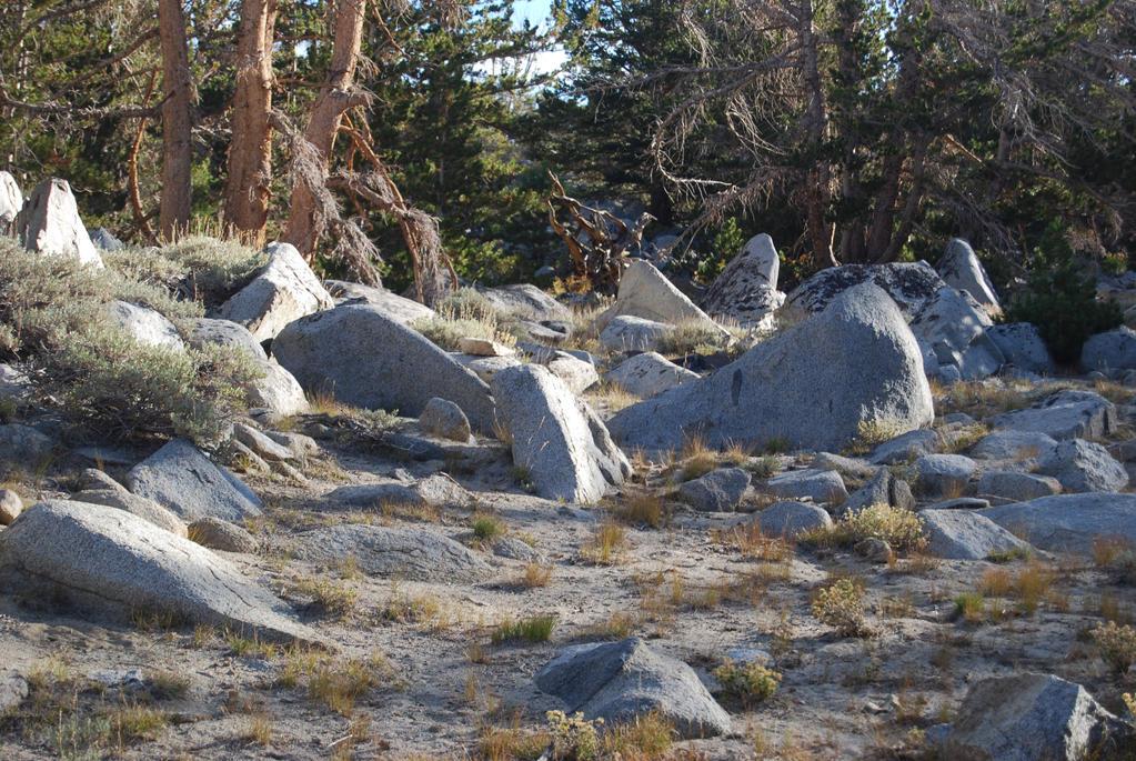 Rocky Forest Landscape 9