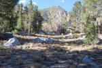 Rocky Forest Landscape 10