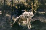 Wild Doggo