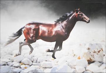 Race The Fog by xxtgxxstock