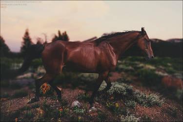 Wild by xxtgxxstock