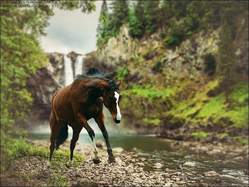 Where's The Wild by xxtgxxstock