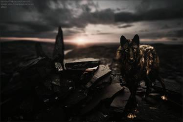 Wolfy by xxtgxxstock