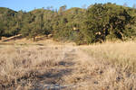 Grassy Landscape 7