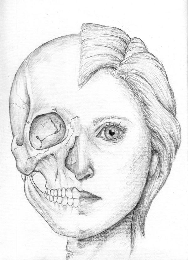 Skeleton Face Line Drawing : Half skull girl by trimmm on deviantart