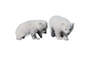 Baby Bears by MariaSemelevich
