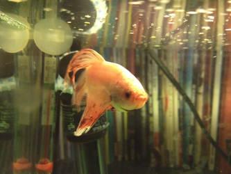 duncan mcfish 3 by Snow-katt