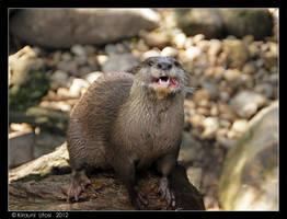Eating otter