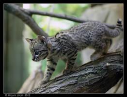 Treecat