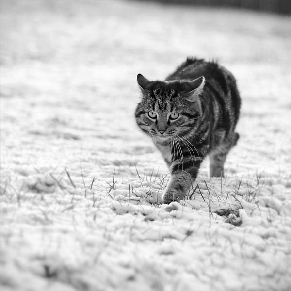 Grumpy cat by StormChazzy
