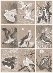 Various Birds ACEOs by Sieskja