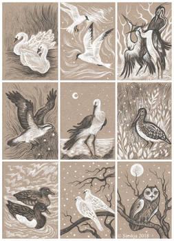 Various Birds ACEOs