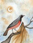 Fairy and Redstart
