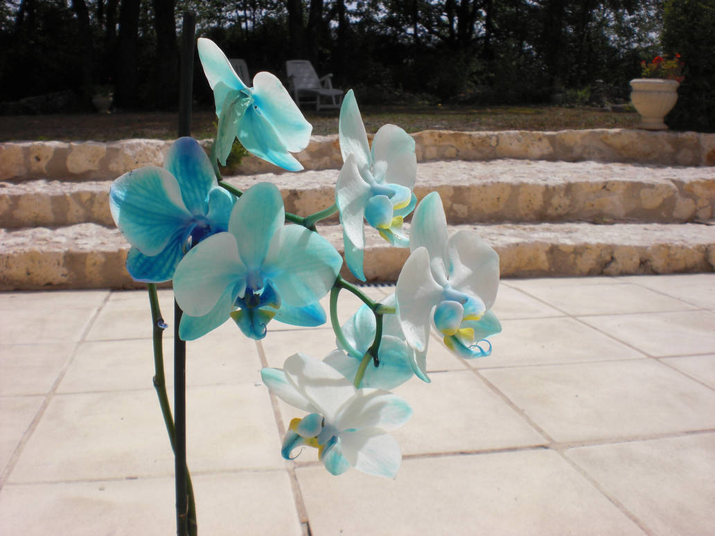 Blue Orchids by HildaAlonso
