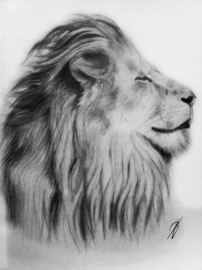Lion pencil drawing by bboyjme