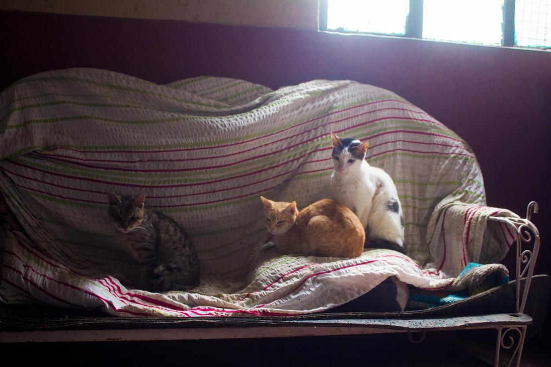 Sunny Cats by AxnAkshan