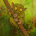 Wild Wednesday - Tarsier