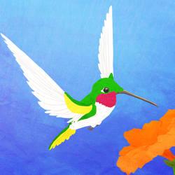 Wild Wednesday - Hummingbird
