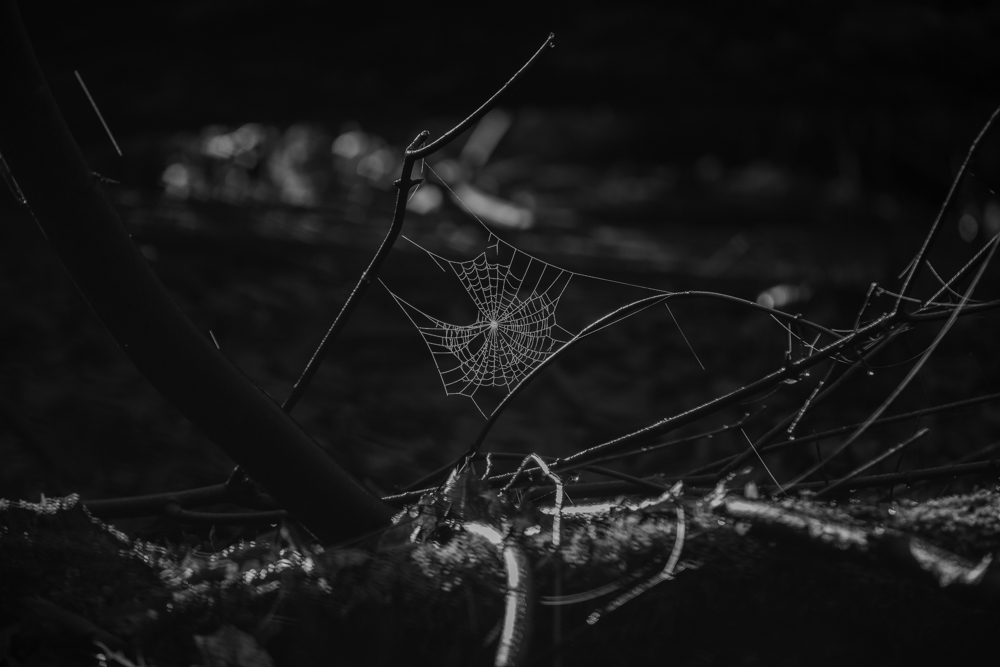 Intricacy of Nature by CommanderEVE