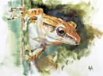 Orange Frog Study