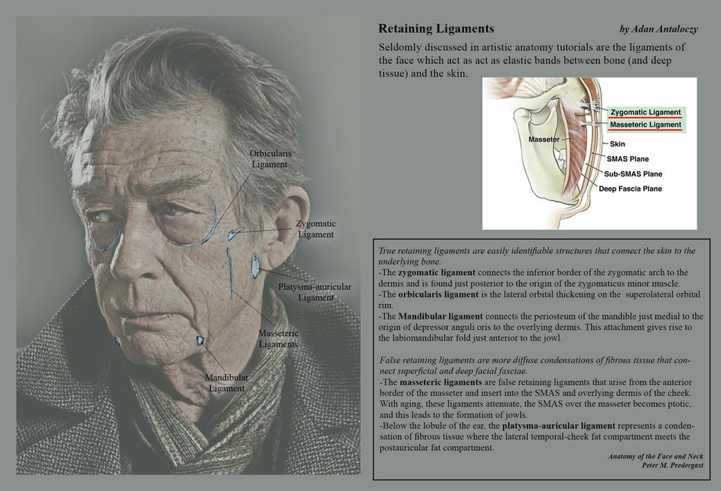 Advanced Head Construction - 09 Retaining Ligament by AdamAntaloczy