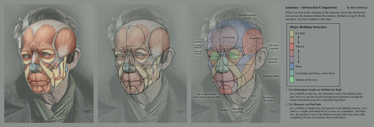 Advanced Head Construction - 12 Anatomy vs Abstrac by AdamAntaloczy