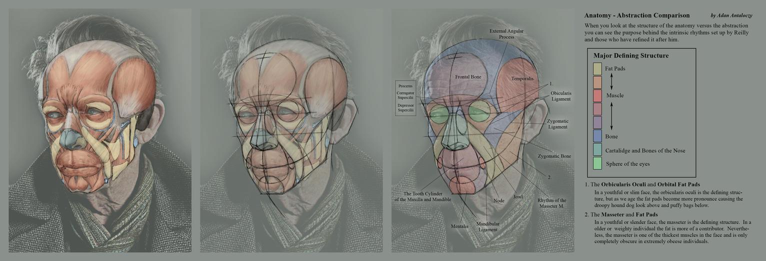 Advanced Head Construction - 12 Anatomy vs Abstrac by AdamAntaloczy ...