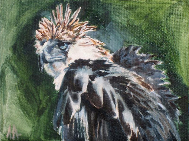 Phillipine Eagle by AdamAntaloczy