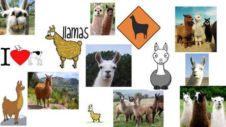 Llamas by randomcheese99