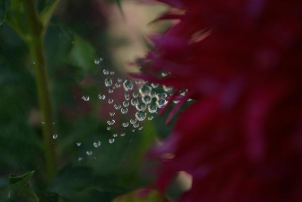 Sneezing Flower