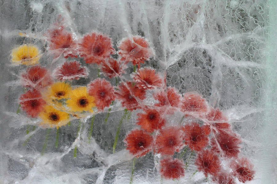 winter flower by ariasigh on deviantart, Beautiful flower