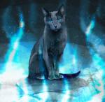 BlueStar - Warrior Cats