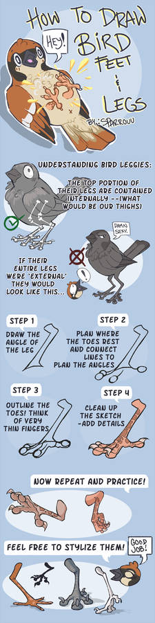How to Draw Bird Feet and Legs