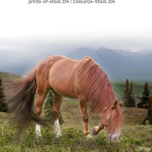 Equus Equine art-fantasy hair by wsl30horselover10