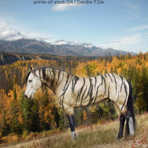 Running Free horse avi by wsl30horselover10