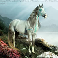 Indian horse crying by wsl30horselover10