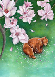 Sweet Magnolia by IreneShpak