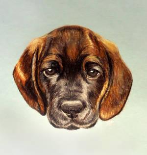 puppy by ilonand