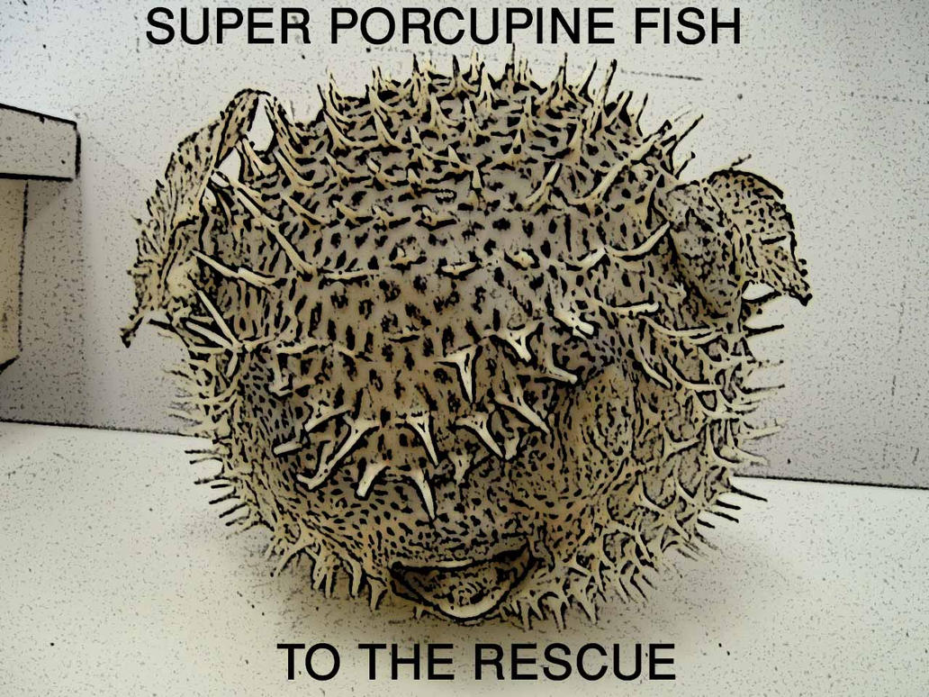 porcupine chatrooms Stream porcupine by echo and the bunnymen and tens of millions of other songs on all your devices with amazon music unlimited exclusive discount for prime members.