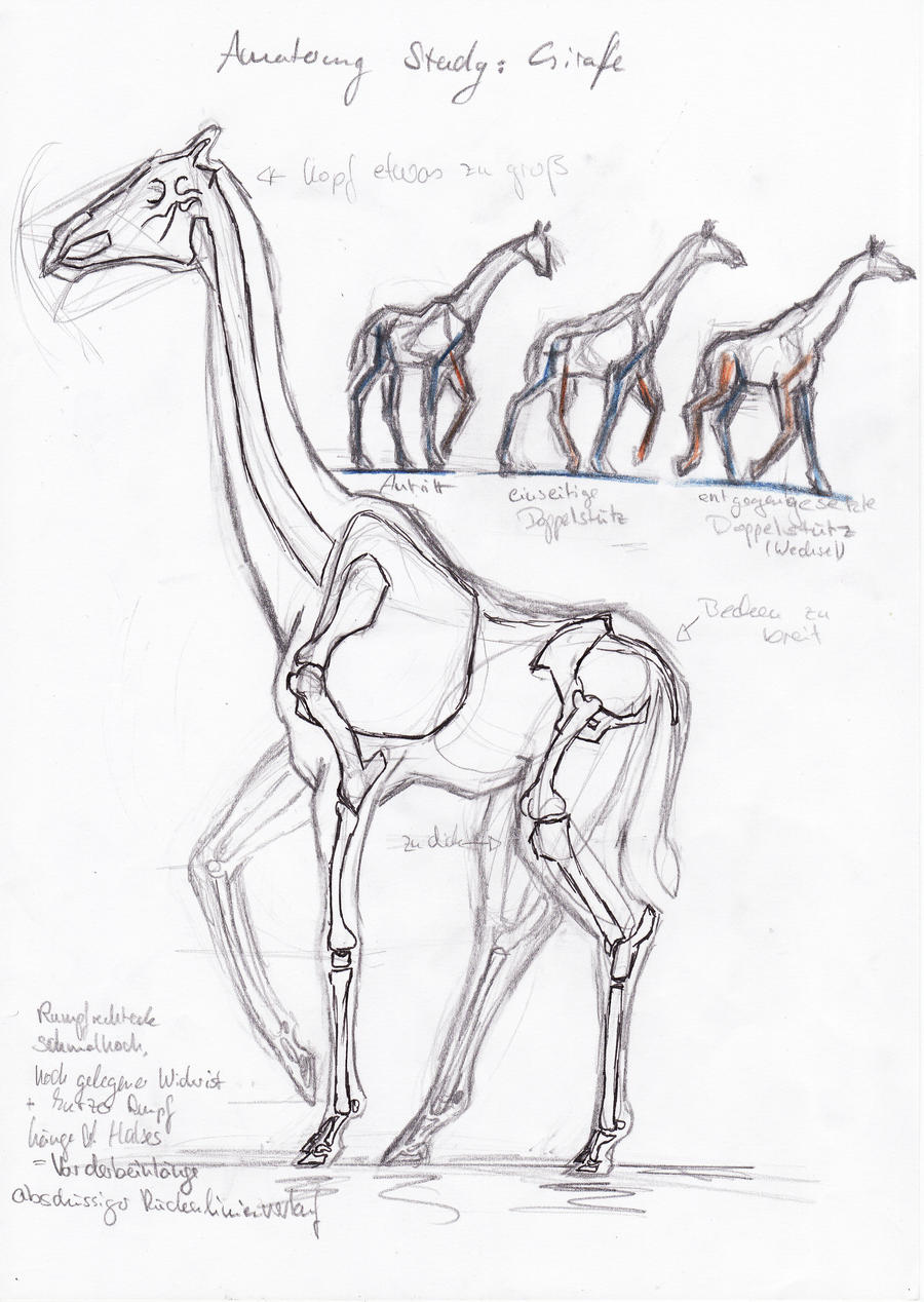 Anatomy Study: Giraffe by tabby223 on DeviantArt