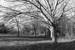 Downhills Park