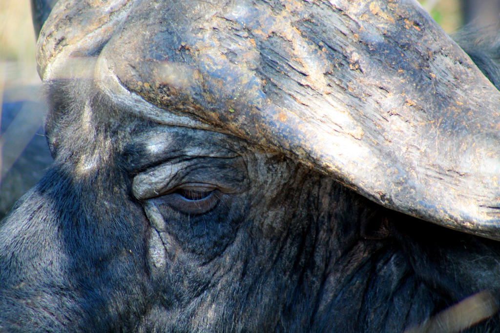 Eye of the Buffalo by 6vivi6ana6