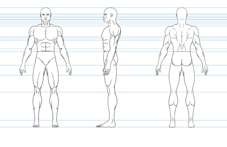 Human Model Sheet Ceriunicaasl