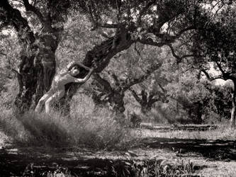 beautiful olive trees (full resolution) by MarcBergmann