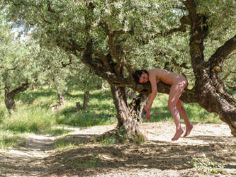 siesta on the old olive tree by MarcBergmann